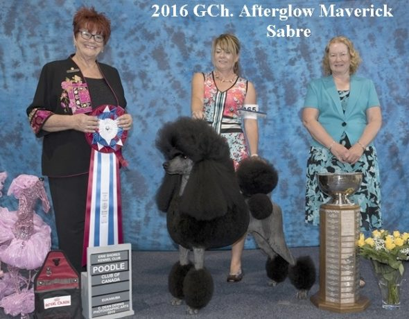 Poodle club of Canada